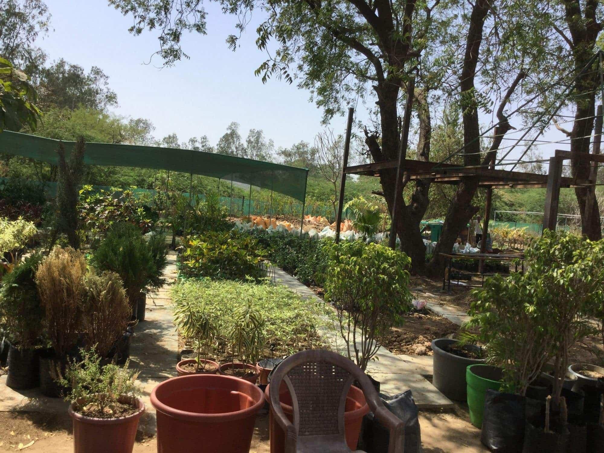 Hyderabadi Nursery Showroom Sanathal Plant Nurseries In Ahmedabad Justdial