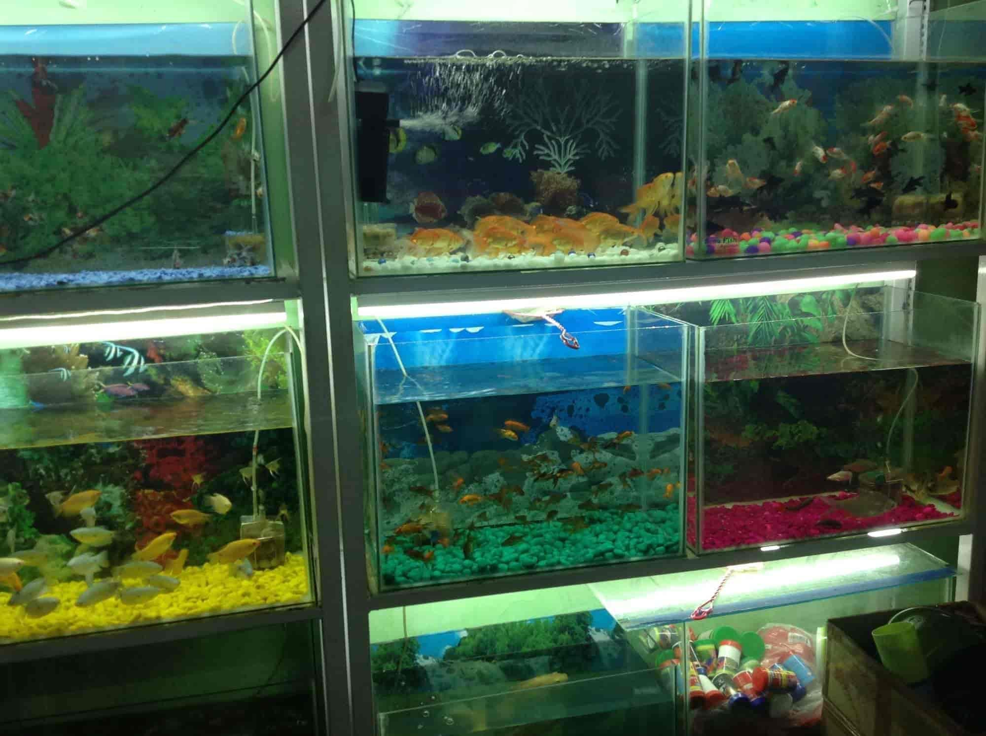 Sonu Fish Aquarium Shop Hathi Bhata Pet Shops In Ajmer Justdial