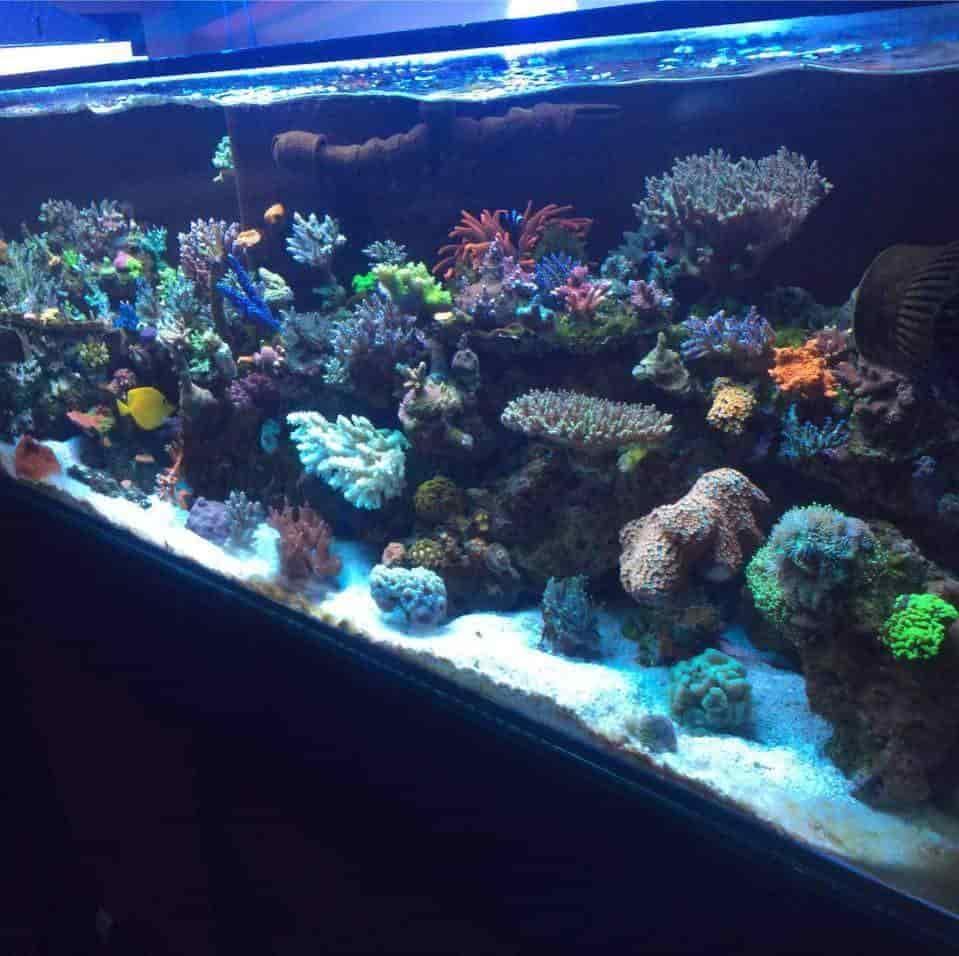 Sonu Fish Aquarium Shop Photos Hathi Bhata Ajmer Pictures