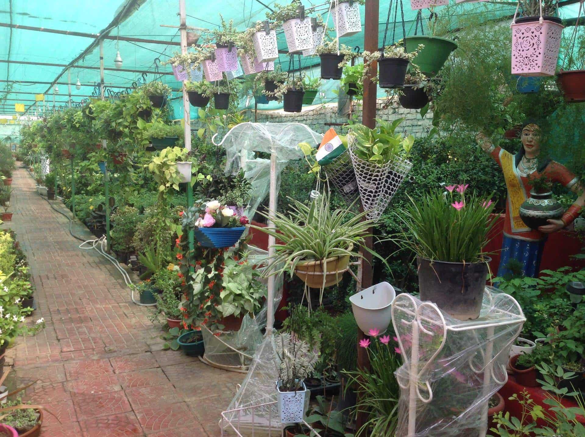 Paradise Nursery Photos Amritsar Plant Nurseries