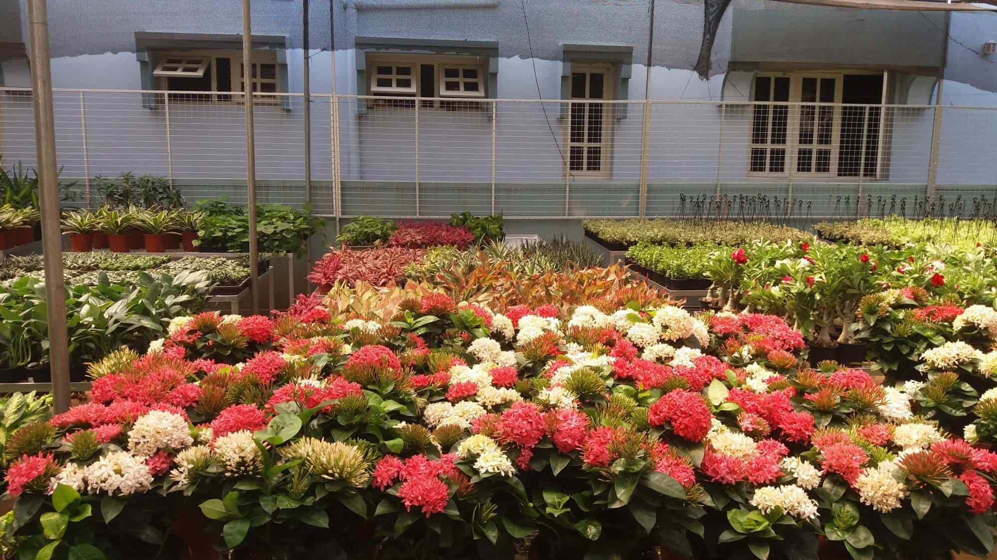 Balaji Nursery Garden Jayanagar