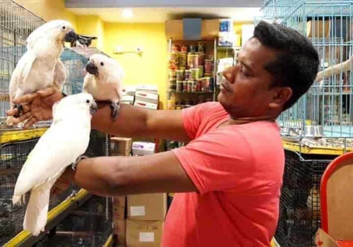Wet Pets, Shivaji Nagar - Pet Shops in Bangalore - Justdial