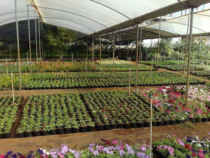 Karthik Farm And Nursery Ajjenahalli