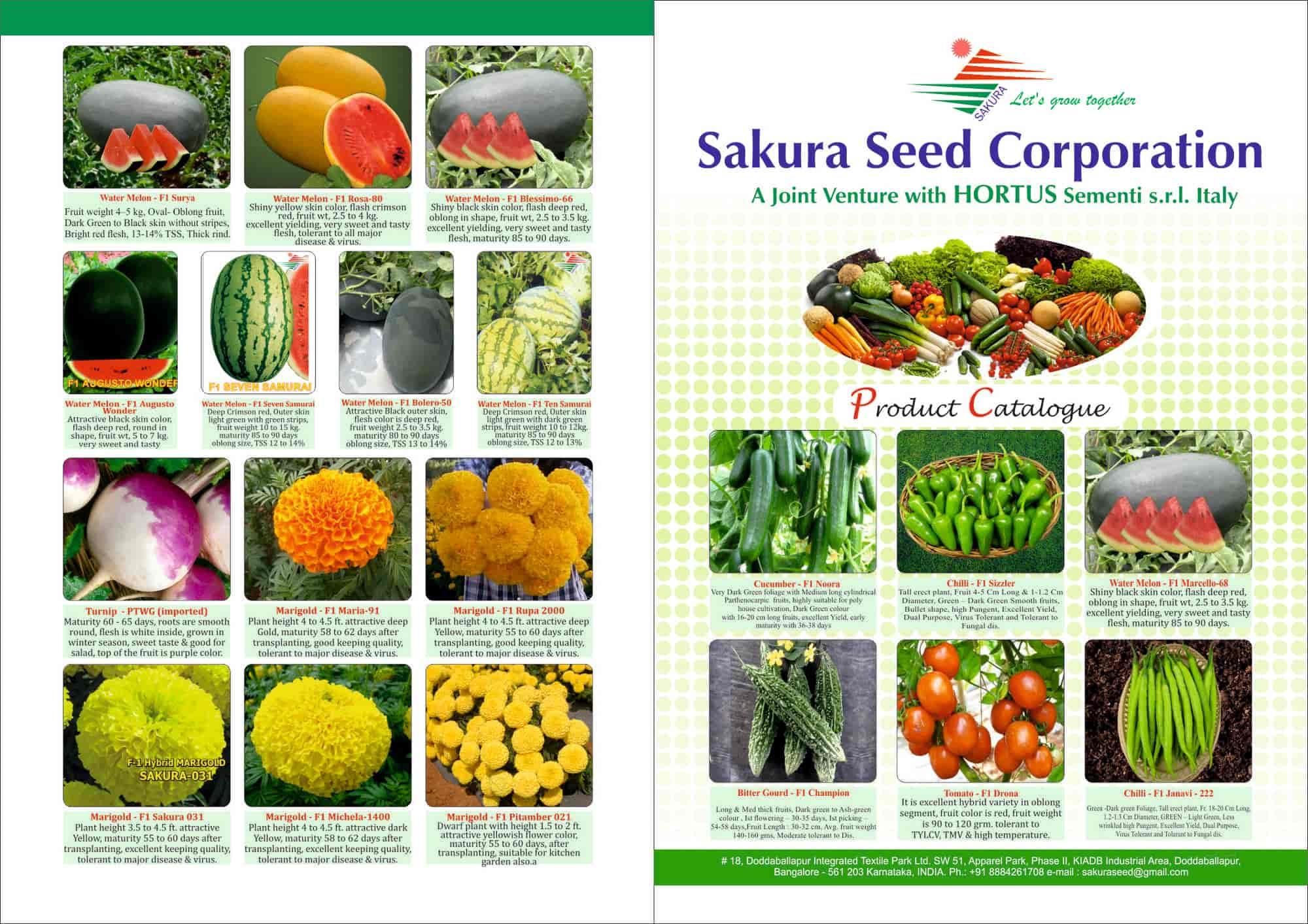 Sakura Seed Corporation, Doddaballapur - Mustard Seed