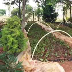 Muneshwara Nursery Plants, Huskur - Plant Nurseries in Bangalore