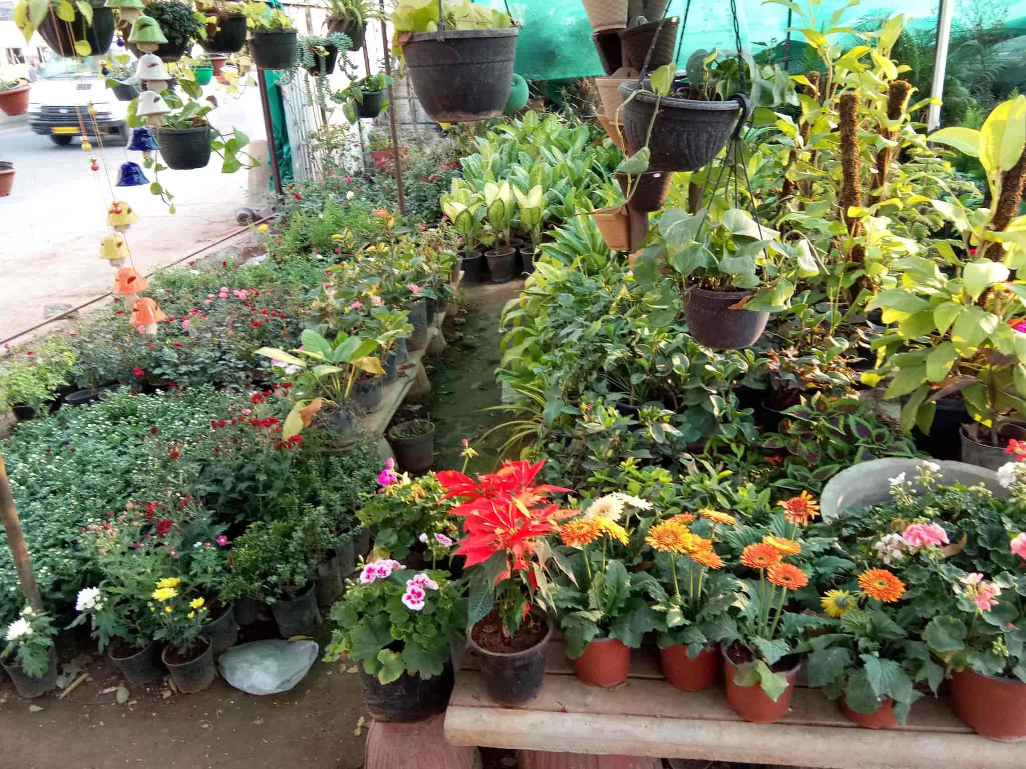indian nursery cement pots and flower plants, kanakapura road