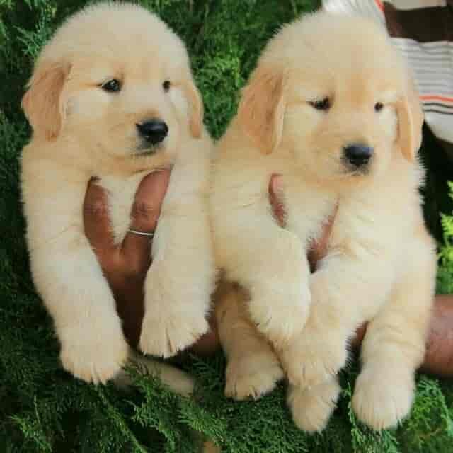 Puppy World, Koramangala - Pet Shops in Bangalore - Justdial