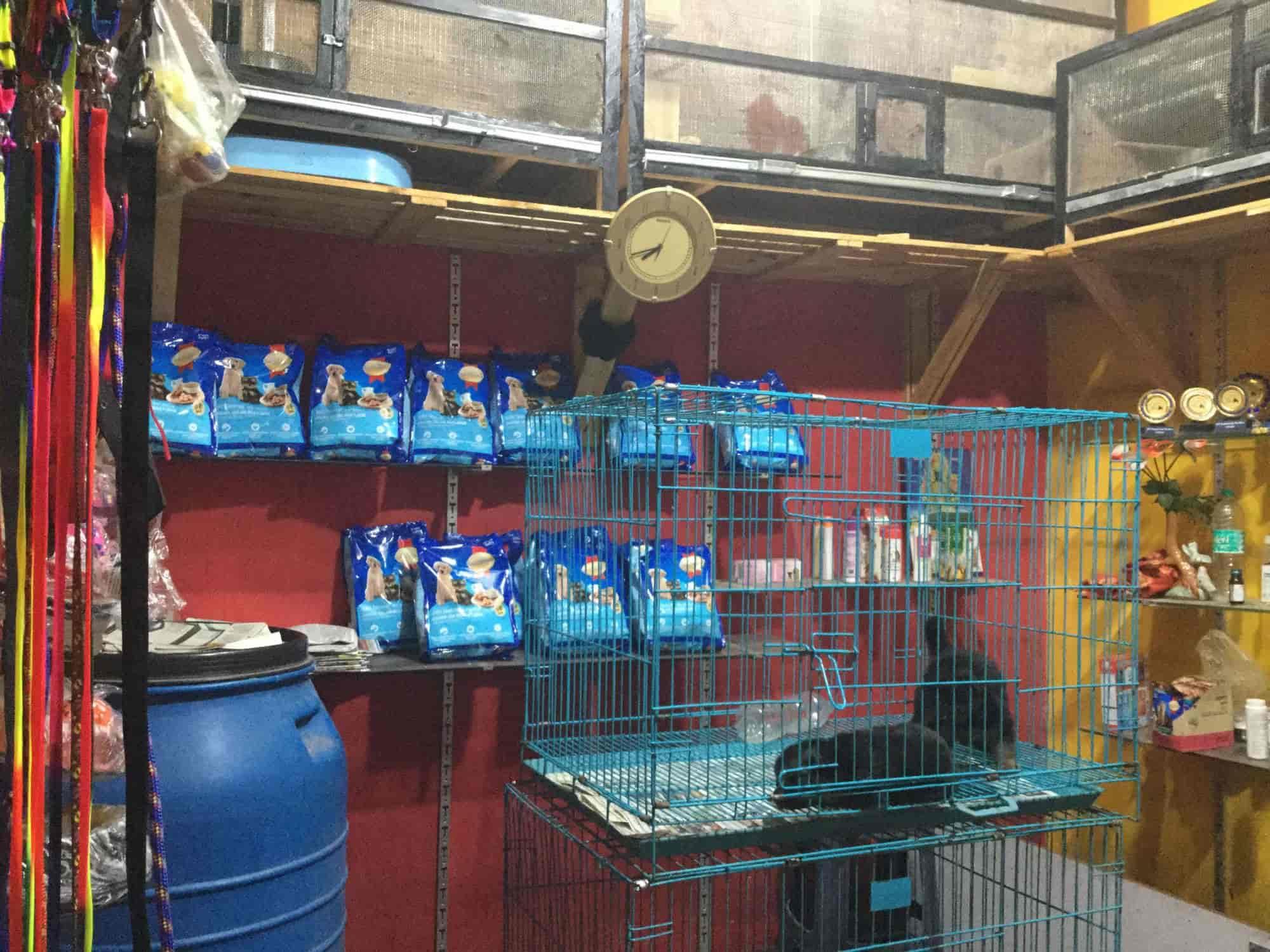 Manoj Pet Shop Kennel Photos, Rt Nagar, Bangalore- Pictures & Images