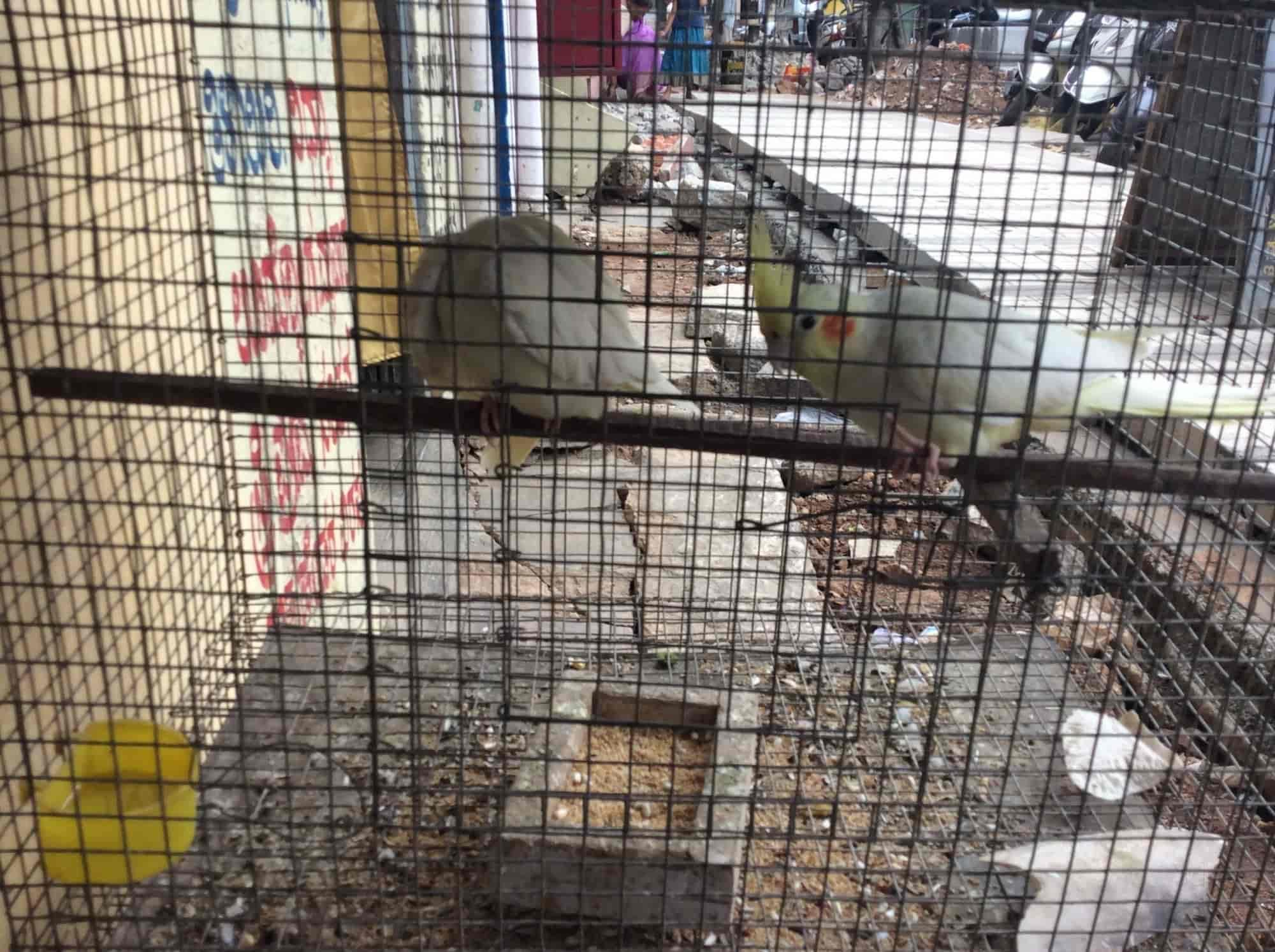 Aquarium HOUSE AND BIRDS Srirampuram Aquarium House & Birds Pet