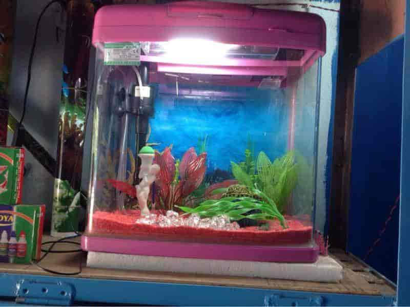 Modern Fish Aquarium Shop, Koharapeer - Aquariums in Bareilly - Justdial
