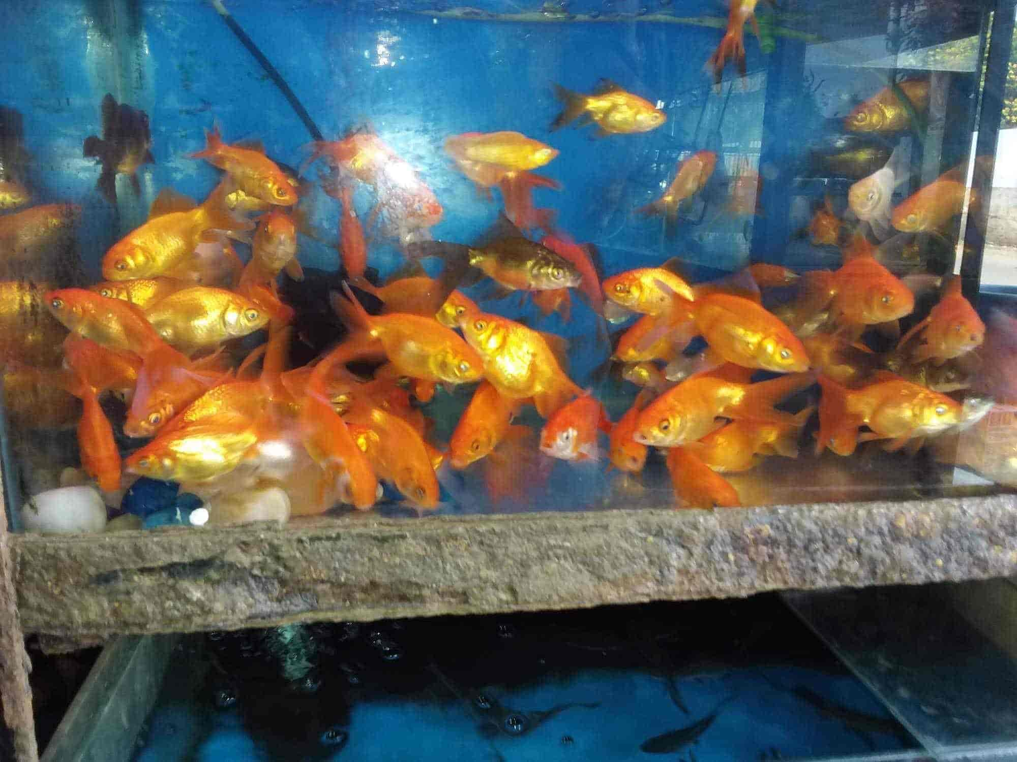 Tropical Nature Aquarium Shivaji Road Aquariums in Belgaum Justdial