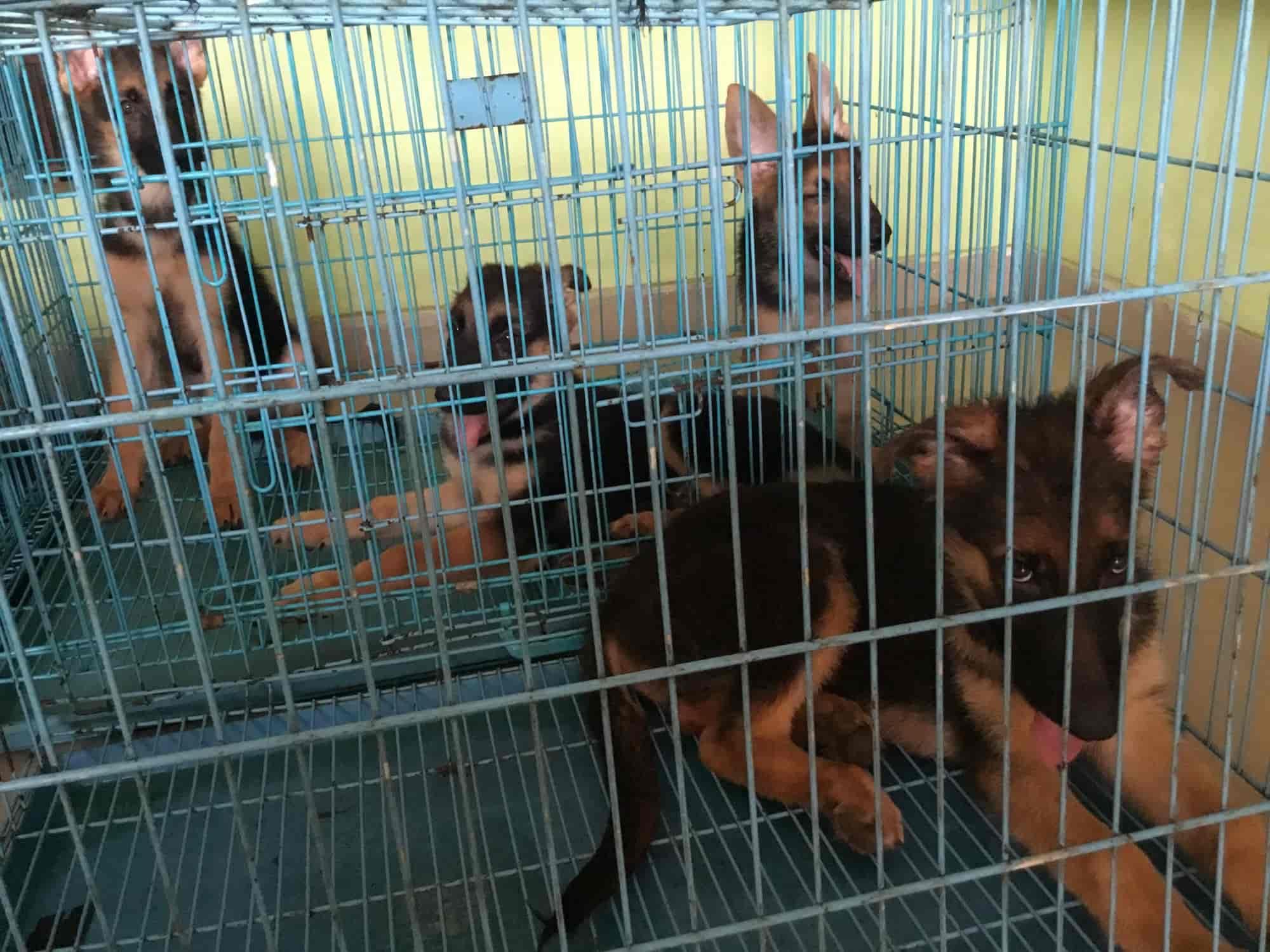 Mahesh Pet Shop - Pet Shops - Book Appointment Online - Pet