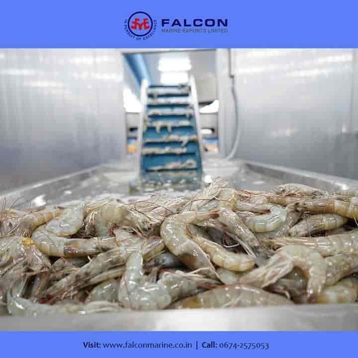 Falcon Marine Exports Ltd, Patia Gds - Marine Services in