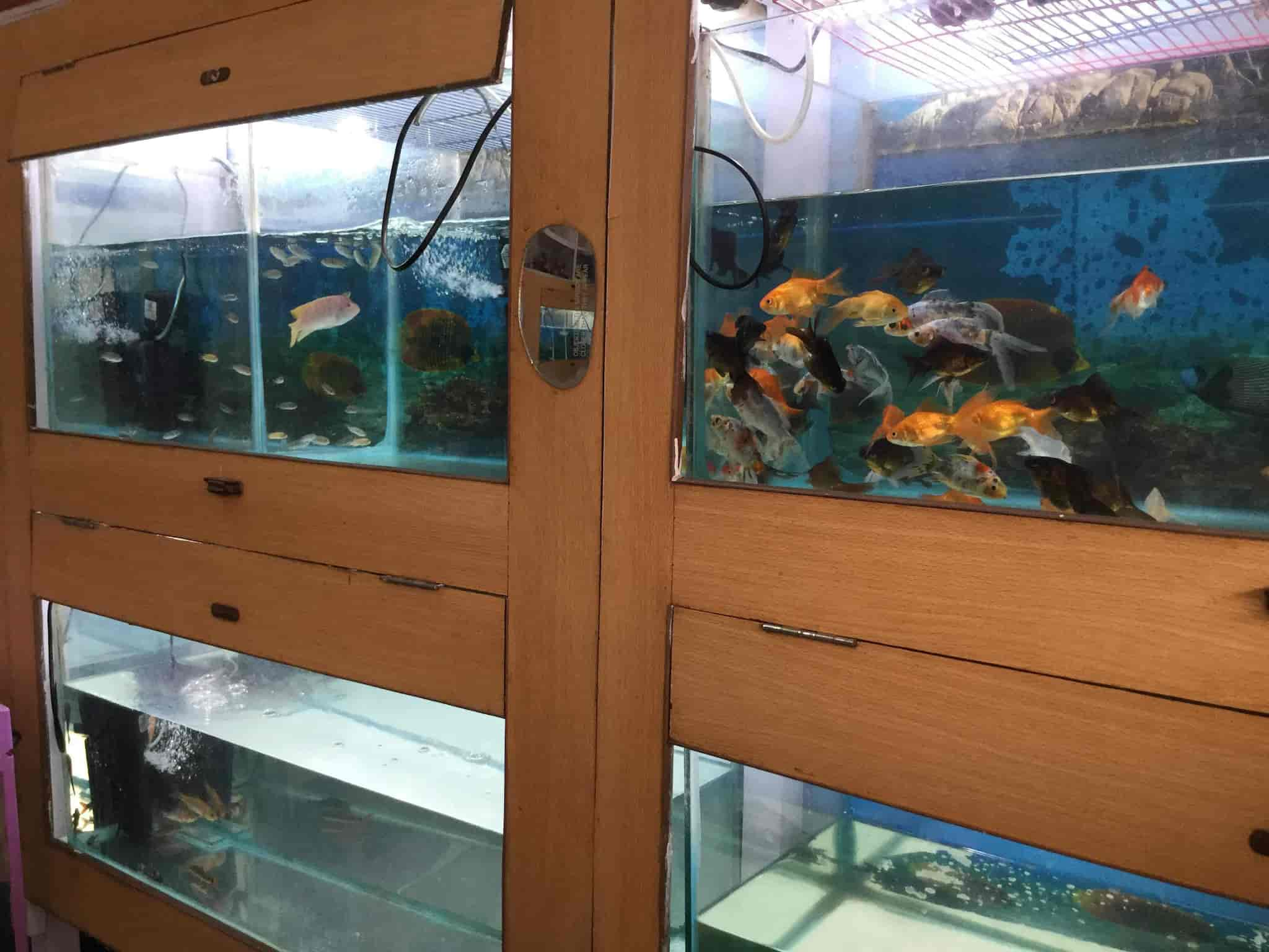RAJA Aquarium Sahid Nagar Pet Shops in Bhubaneshwar Justdial