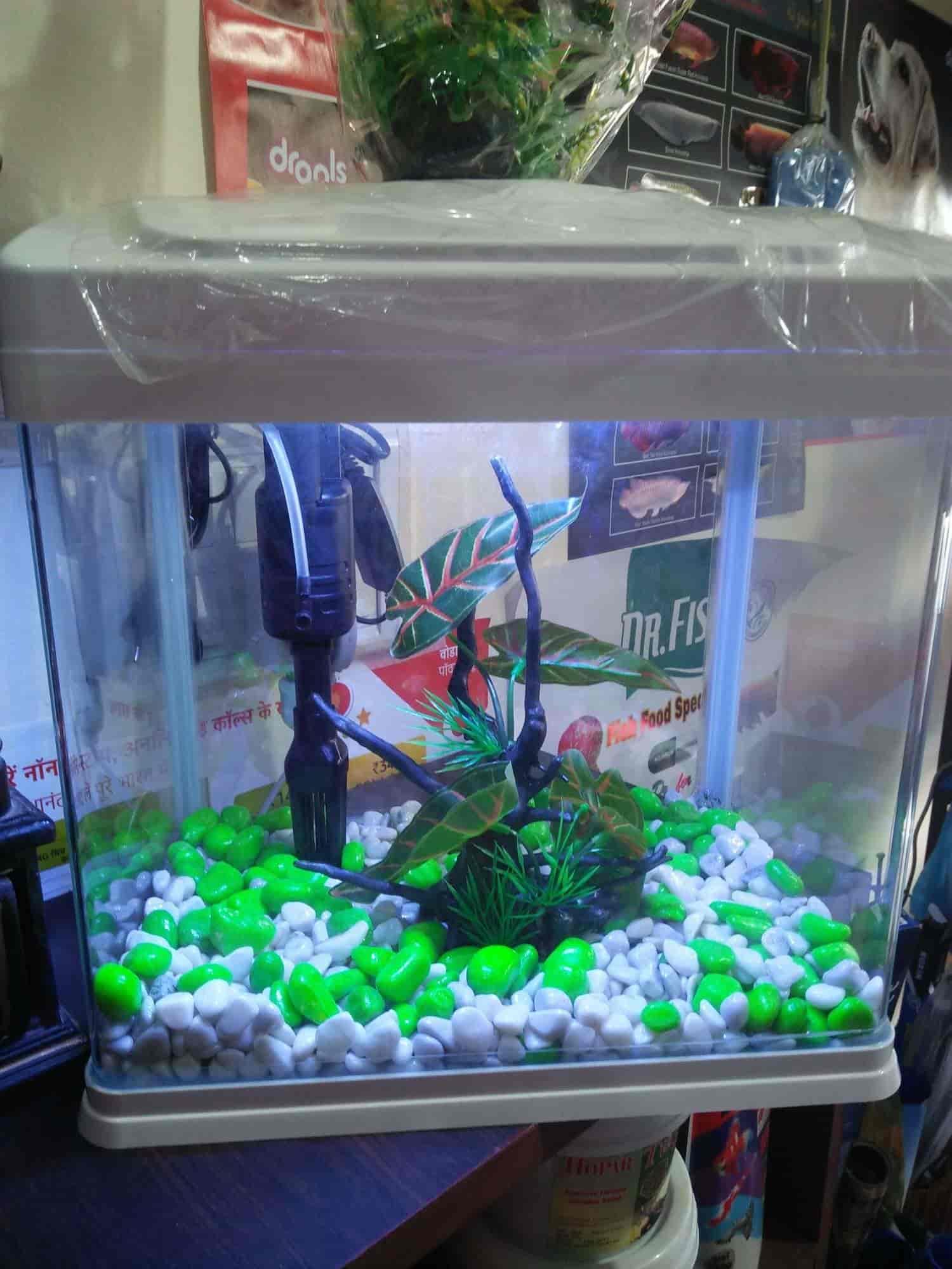 Ocean Fish Aquarium Pet Shop Kharar Pet Shops In Chandigarh