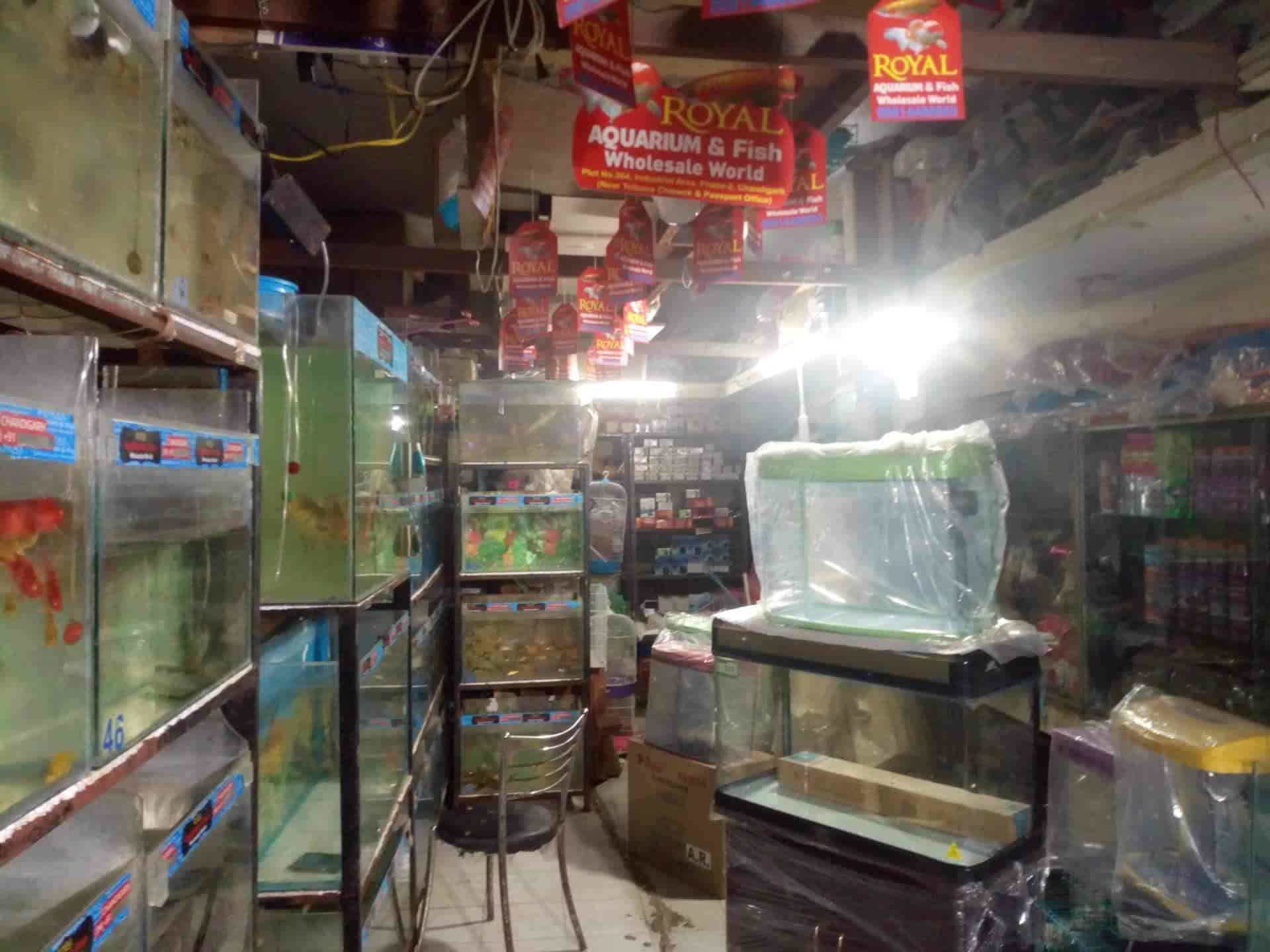 Royal Aquarium Fish Wholesale World Industrial Area Phase Ii Pet Shops In Chandigarh Justdial