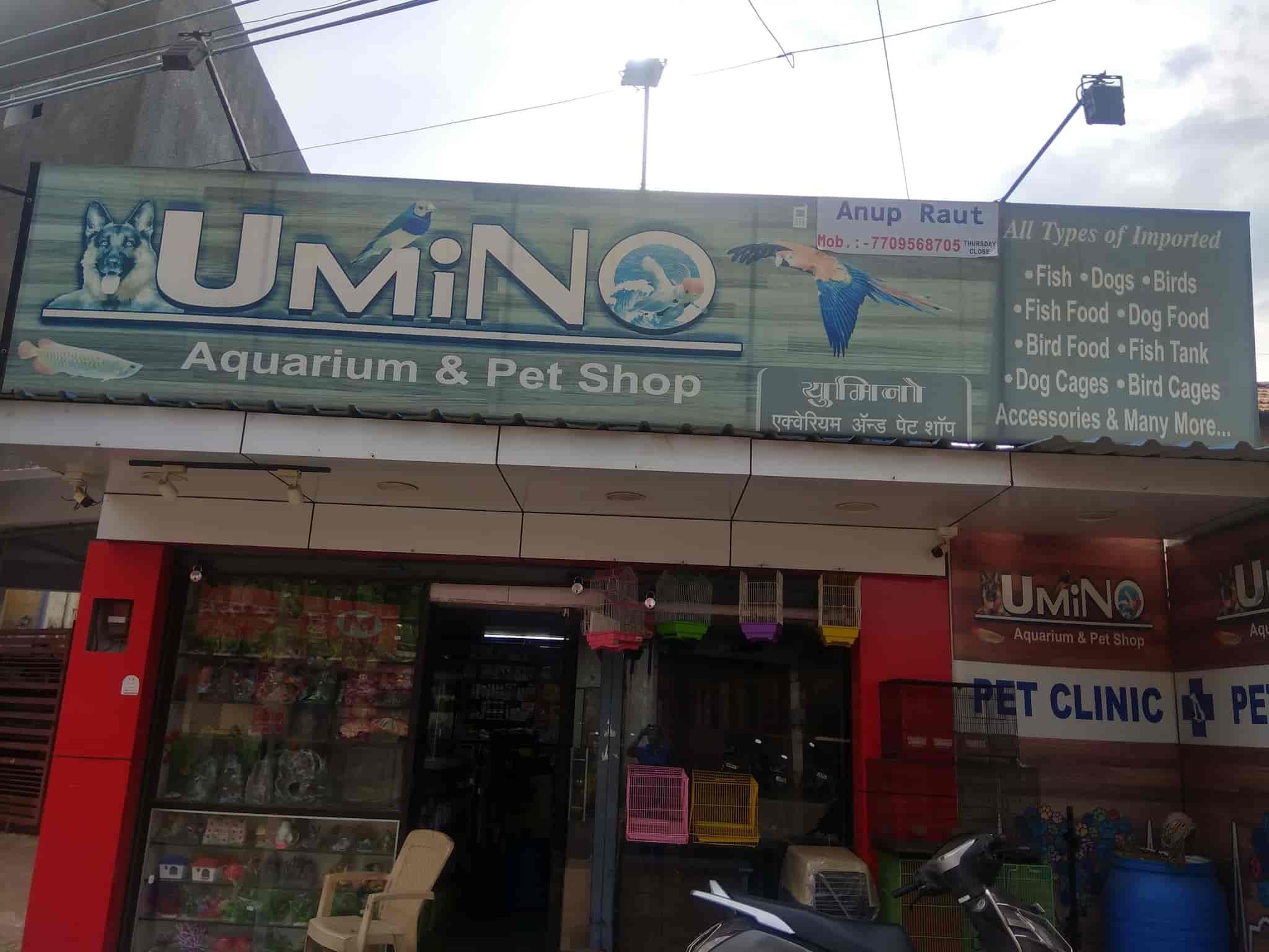 Umino Aquarium And Pet Shop Chandrapur Ho Pet Shops In Chandrapur Justdial
