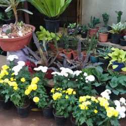 Green Covers Landscape Designers Shakambari Garden Adyar Garden Maintenance Services In Chennai Justdial