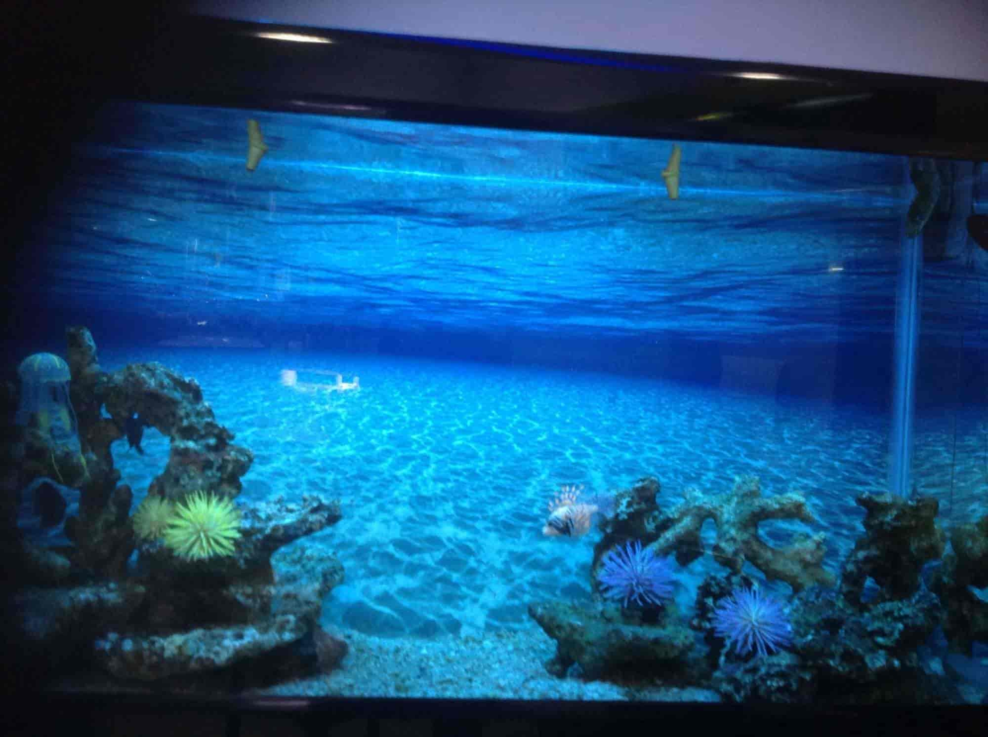 Aquarium Design India s Mount Road Chennai &
