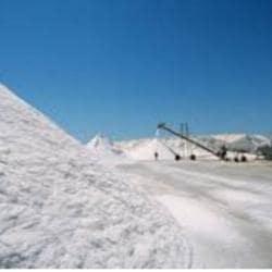 Tamilnadu Salt Corporation LTD, Mount Road - Salt Manufacturers in