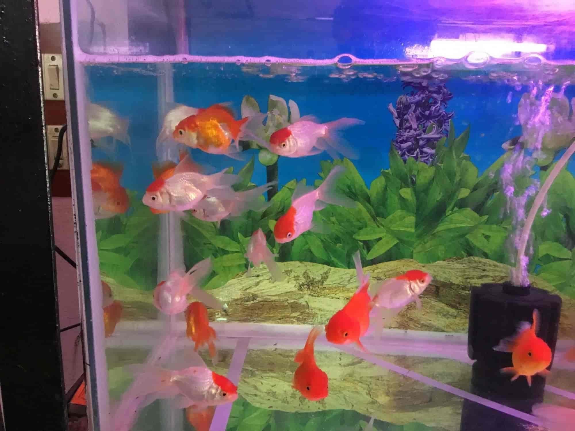 rainbow aquarium kolathur aquariums in chennai justdial