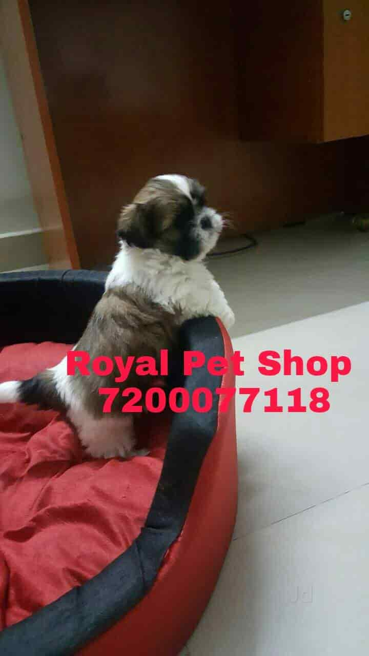 Royal Pet Shop Saidapet Pet Shops In Chennai Justdial