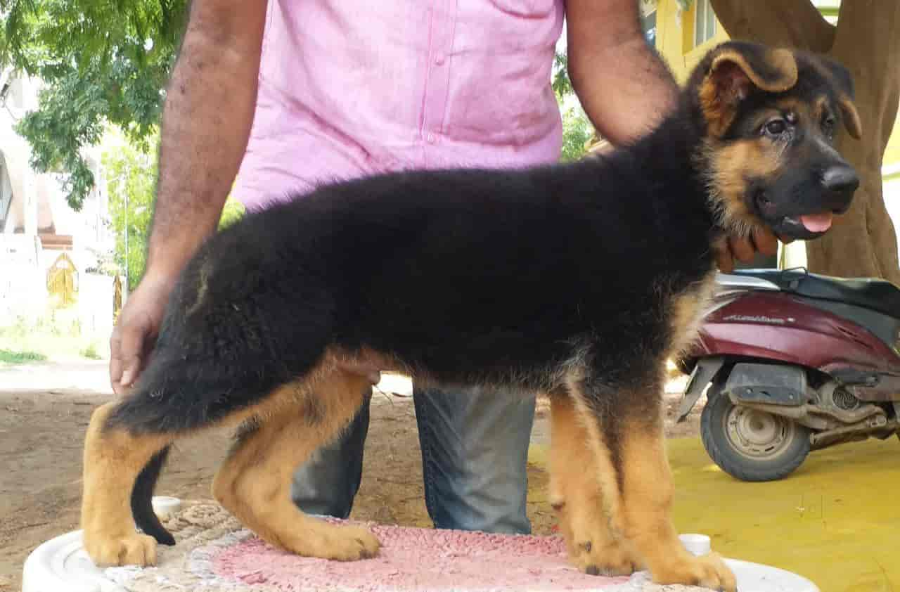 PETS SHOP(All Type Of Dog Puppys Available), Tambaram East