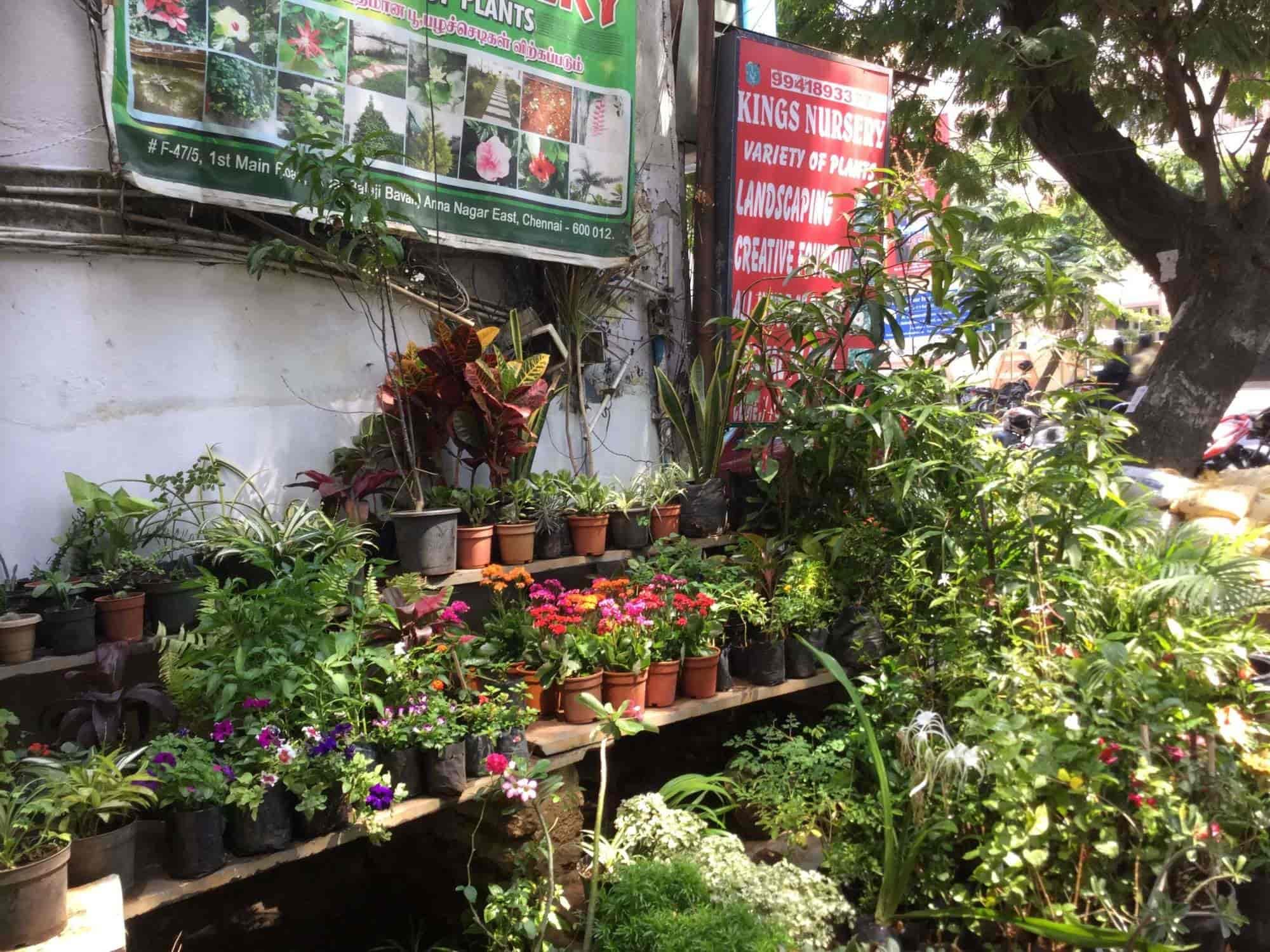 Kings Nursery Closed Down Photos Anna Nagar East Chennai Garden Maintenance