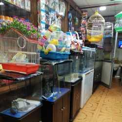 Divya Pet Shop Adyar Pet Shops In Chennai Justdial