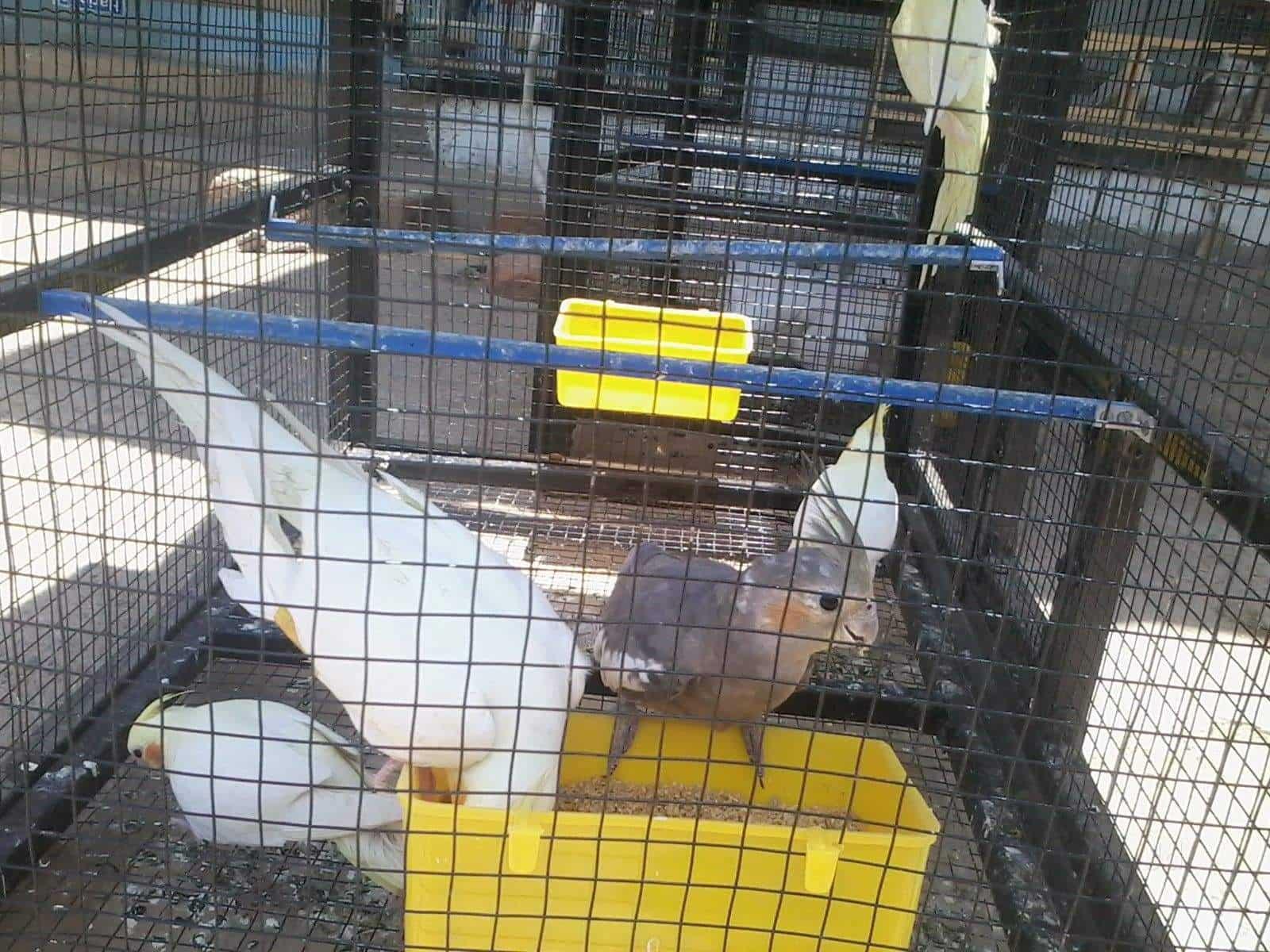OMR Classic Pet Shop & Aquarium Perungudi Pet Shops in Chennai