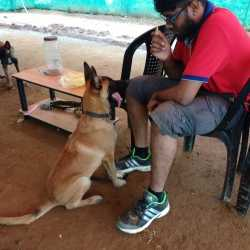 Travail Dog Trainer, Valasaravakkam - Dog Trainers in ...