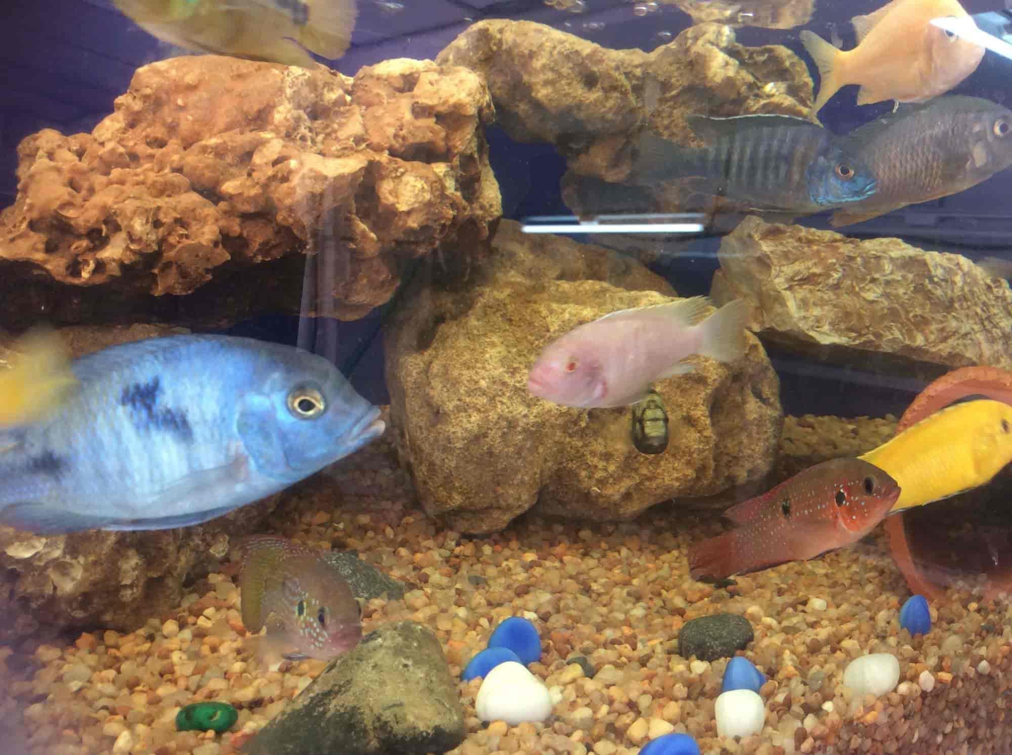 Naaf Aqua Farm Kolathur Aquarium Fish Dealers In Chennai Justdial