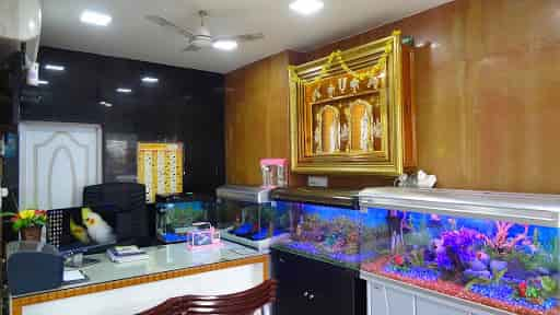 Divya Aquarium And Pet Shop Keelakattalai Pet Shops In Chennai Justdial