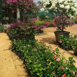 5 Magic Seeds Surapet Plant Nurseries In Chennai Justdial