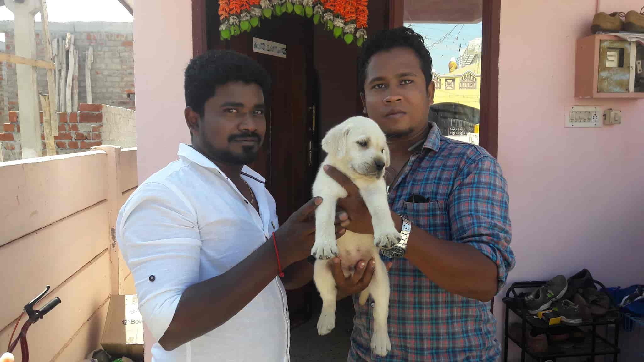 The Sai Kennel, Rs Puram Coimbatore - Pet Shops in