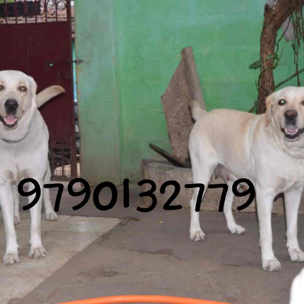Yazhli Pets And Kennels, RS Puram - Pet Shops in Coimbatore - Justdial