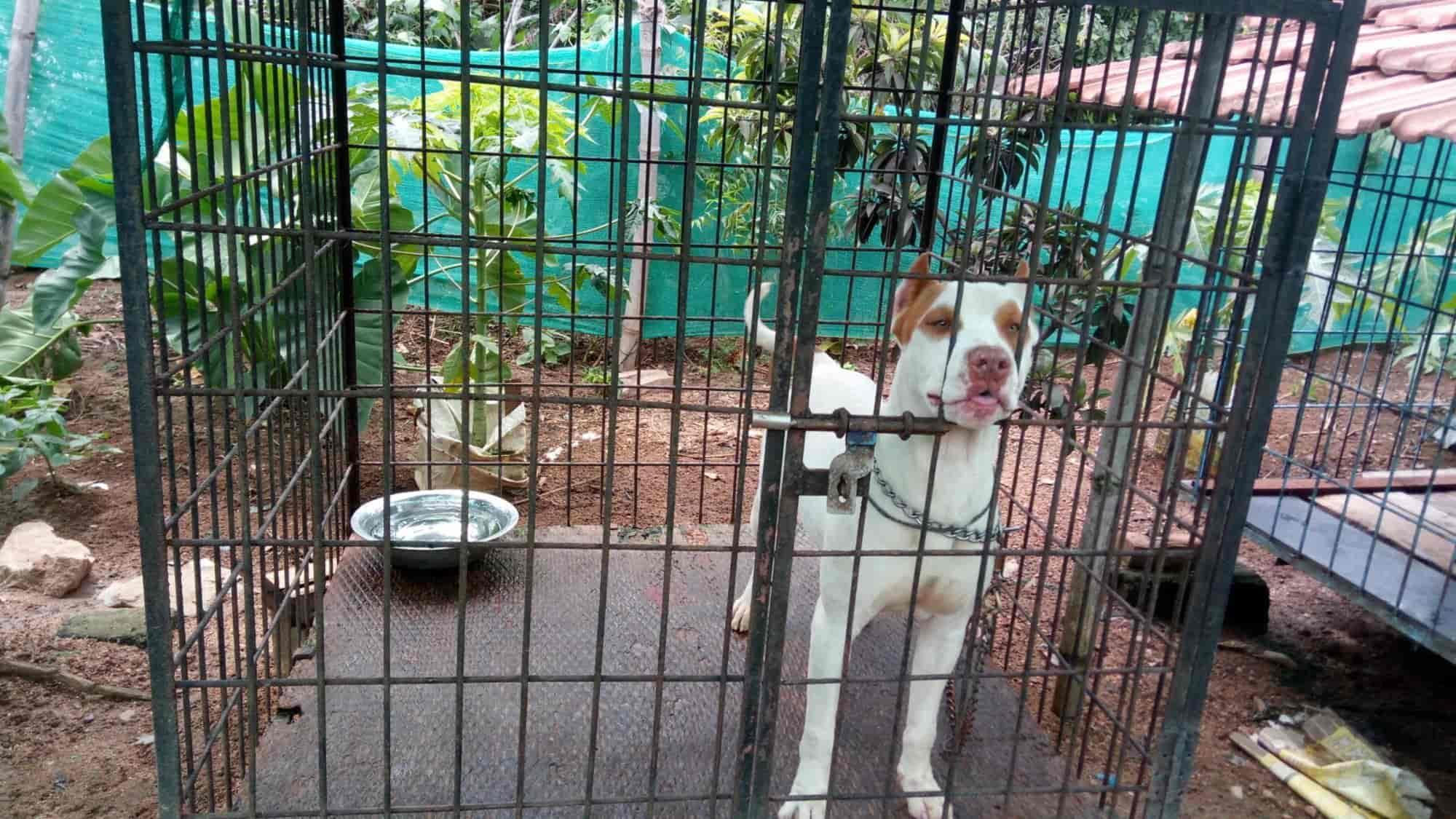 Coorg Pet Land, Kushalnagar - Pet Shops in Coorg - Justdial