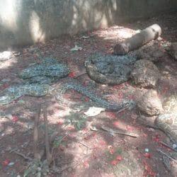 Snake Park - Zoo in Dakshina Kannada - Justdial