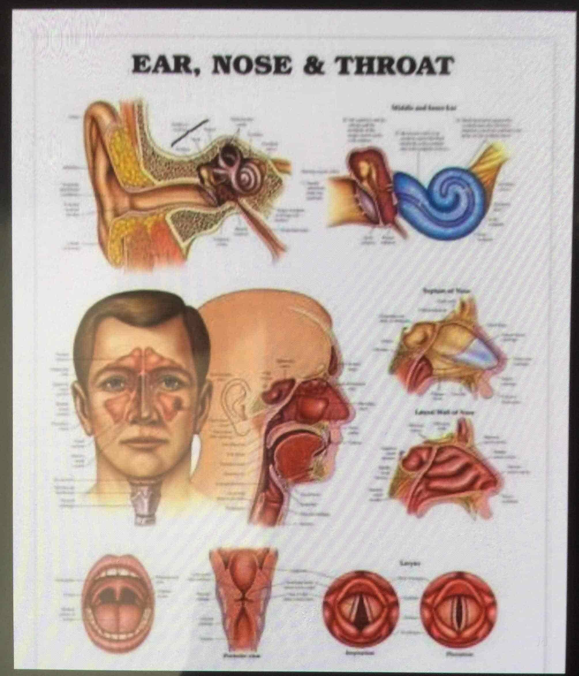 Central California Ear Nose And Throat Wiring Diagram