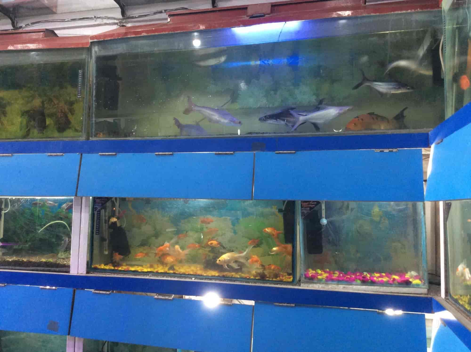 Shri Balaji Fish Aqurium Dehradun City Aquariums in Dehradun
