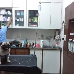 Dr  Ranjit Kharab (dr  Kharbs Pet Clinic & Surgery