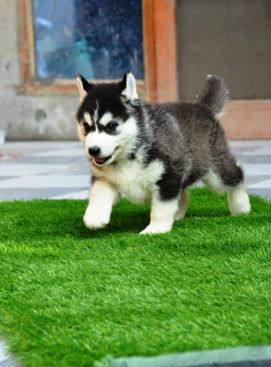 Dav Pet Lovers Dwarka Pet Shops For Dog In Delhi Justdial