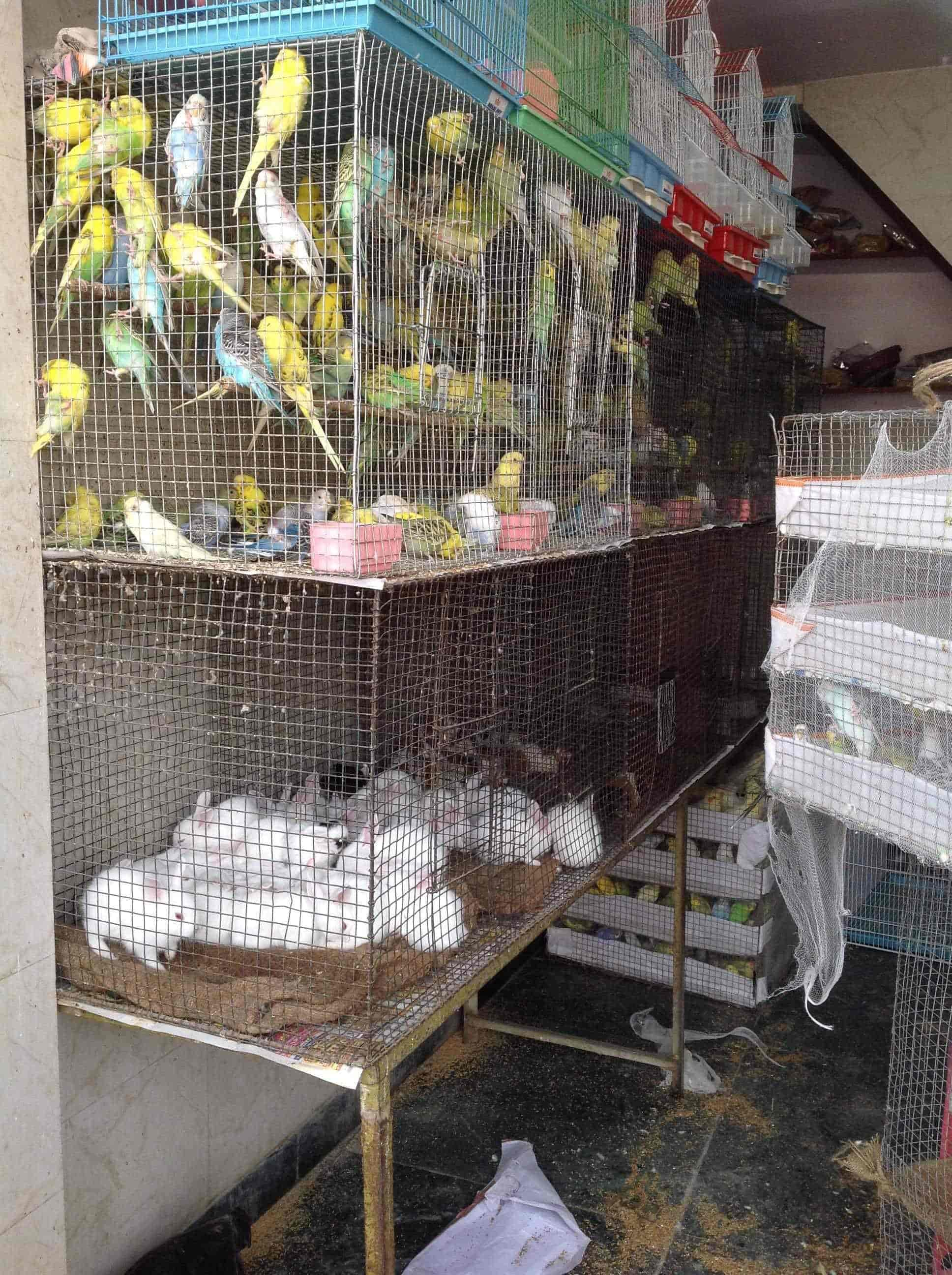 Hobby Zoo, Jama Masjid - Pet Shops in Delhi - Justdial