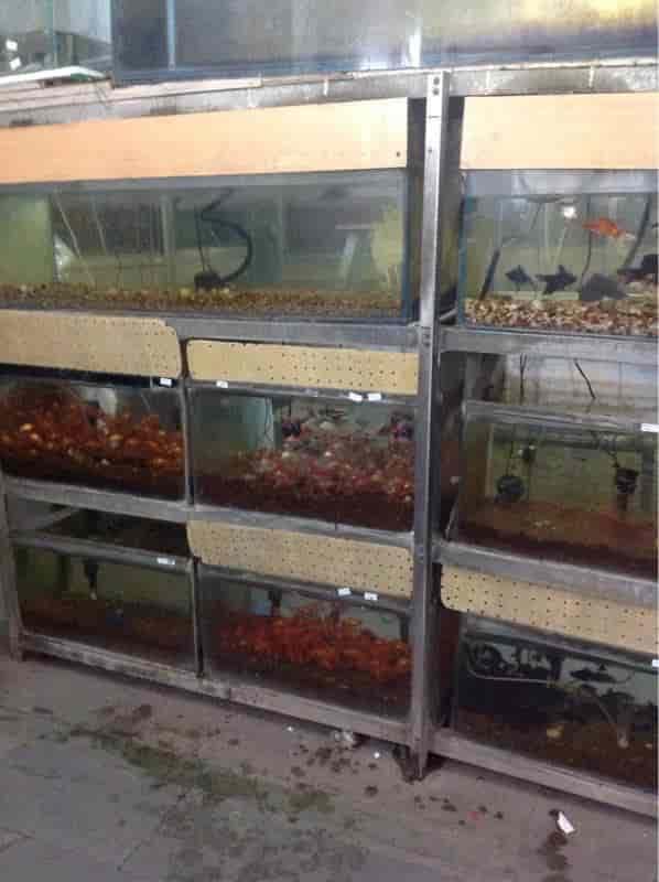 Fish Aquarium Home Laxmi Nagar Delhi Kitchen And Living Space