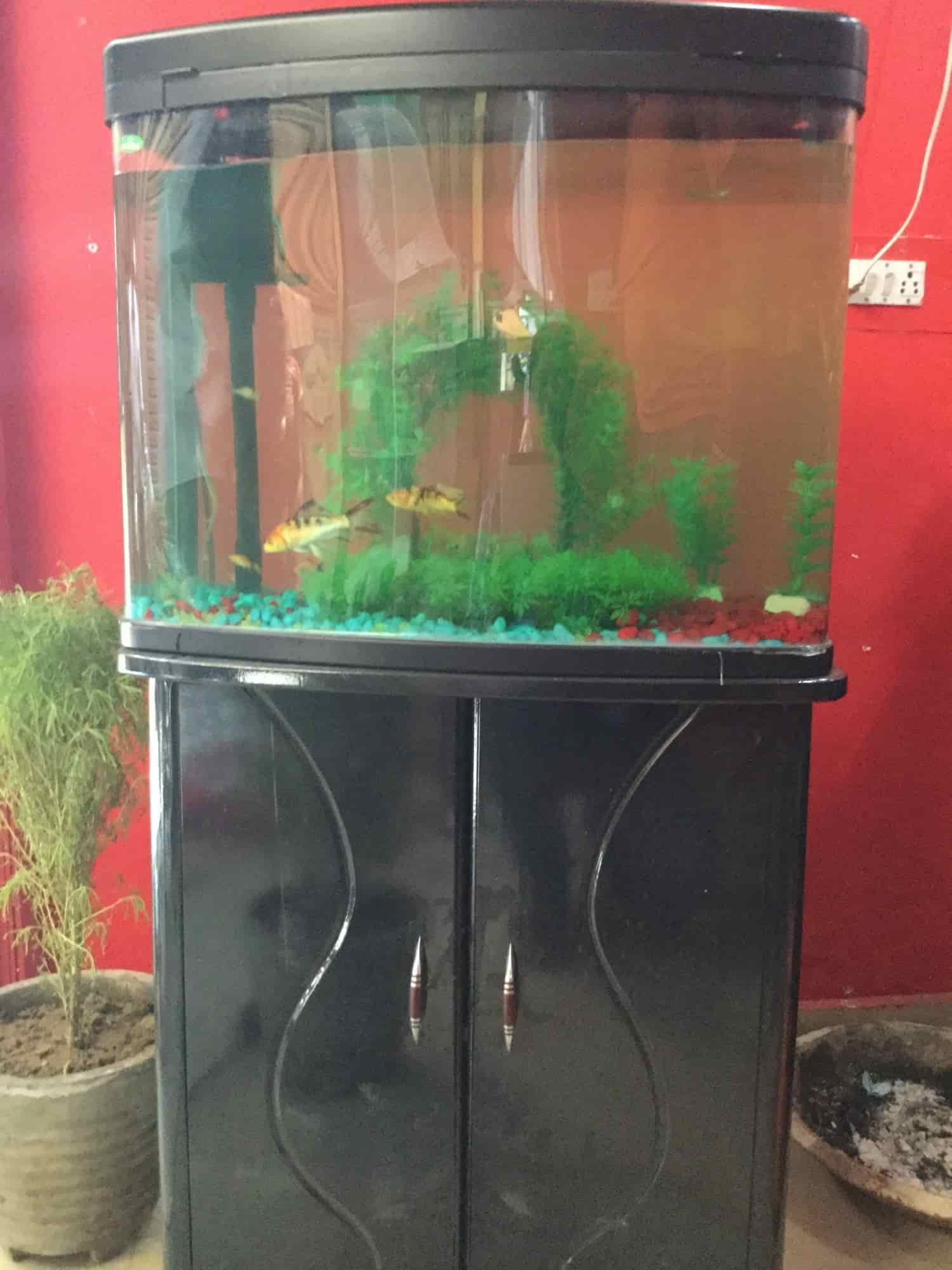 Anmol Pet Shop Fish Aquarium s Shalimar Bagh Delhi NCR
