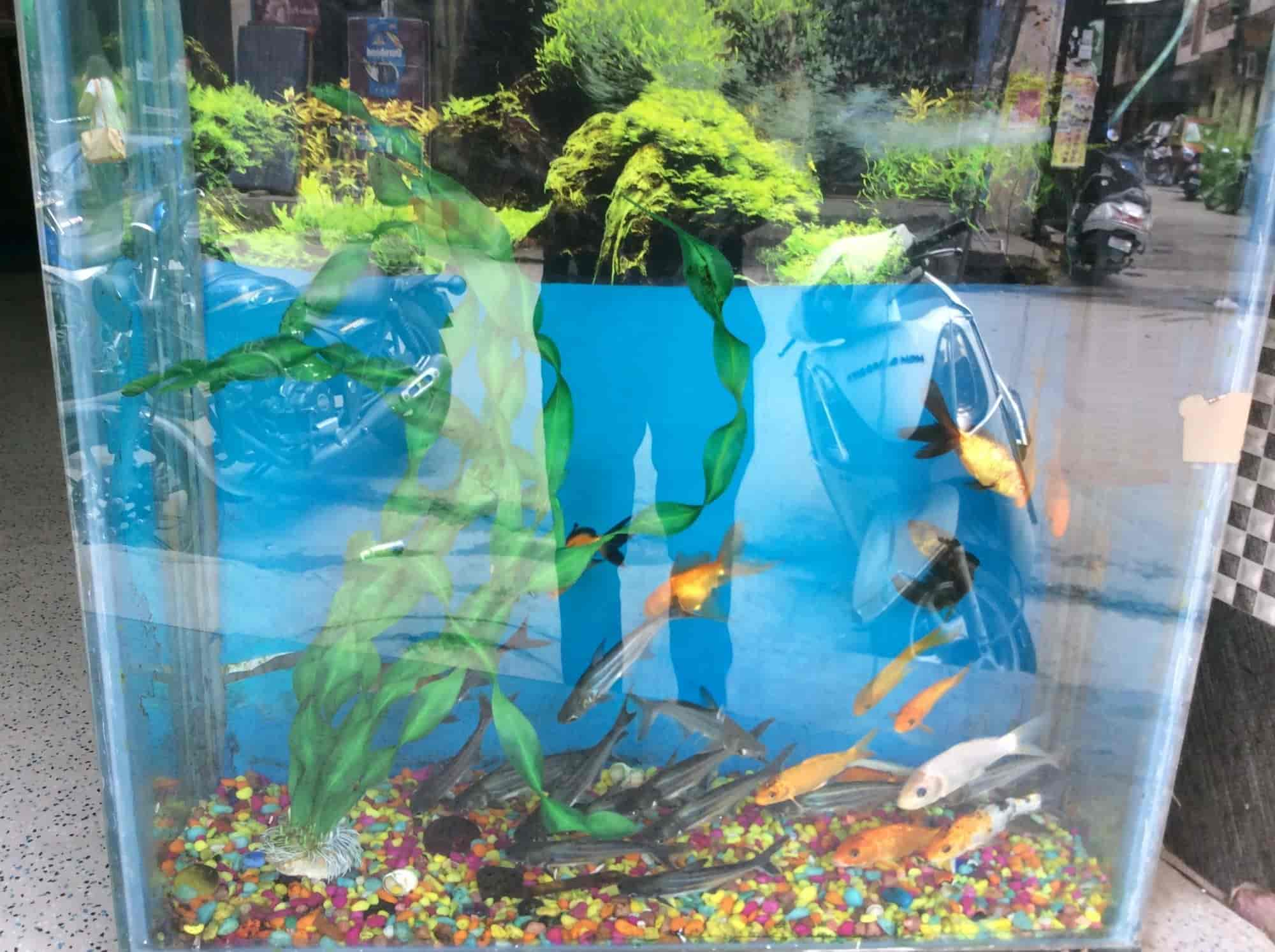 World Fish Aquarium & Pet Store Uttam Nagar Pet Shops in Delhi