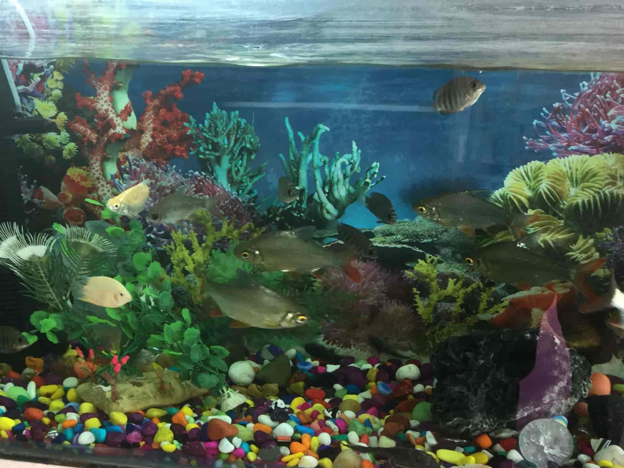 World Fish Aquarium & Pet Store Uttam Nagar Pet Shops in Delhi
