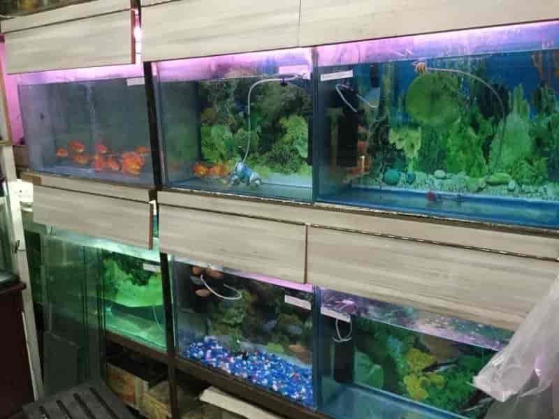 Aqua Point Fish Aquarium Shop Janakpuri C Block Fish Tank