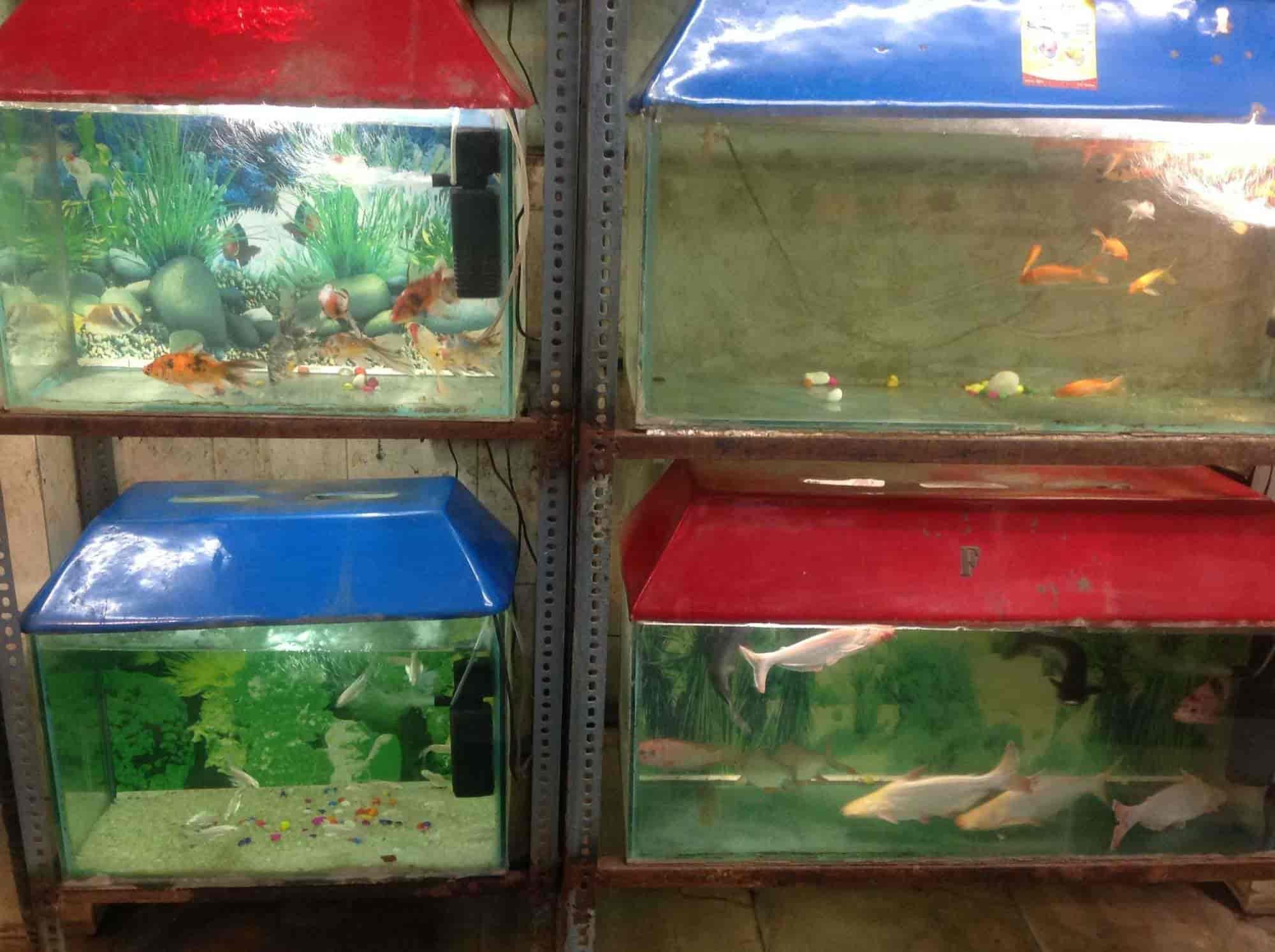Guddu Fish Aquariums Lal Kuan Bazar Aquariums in Delhi Justdial