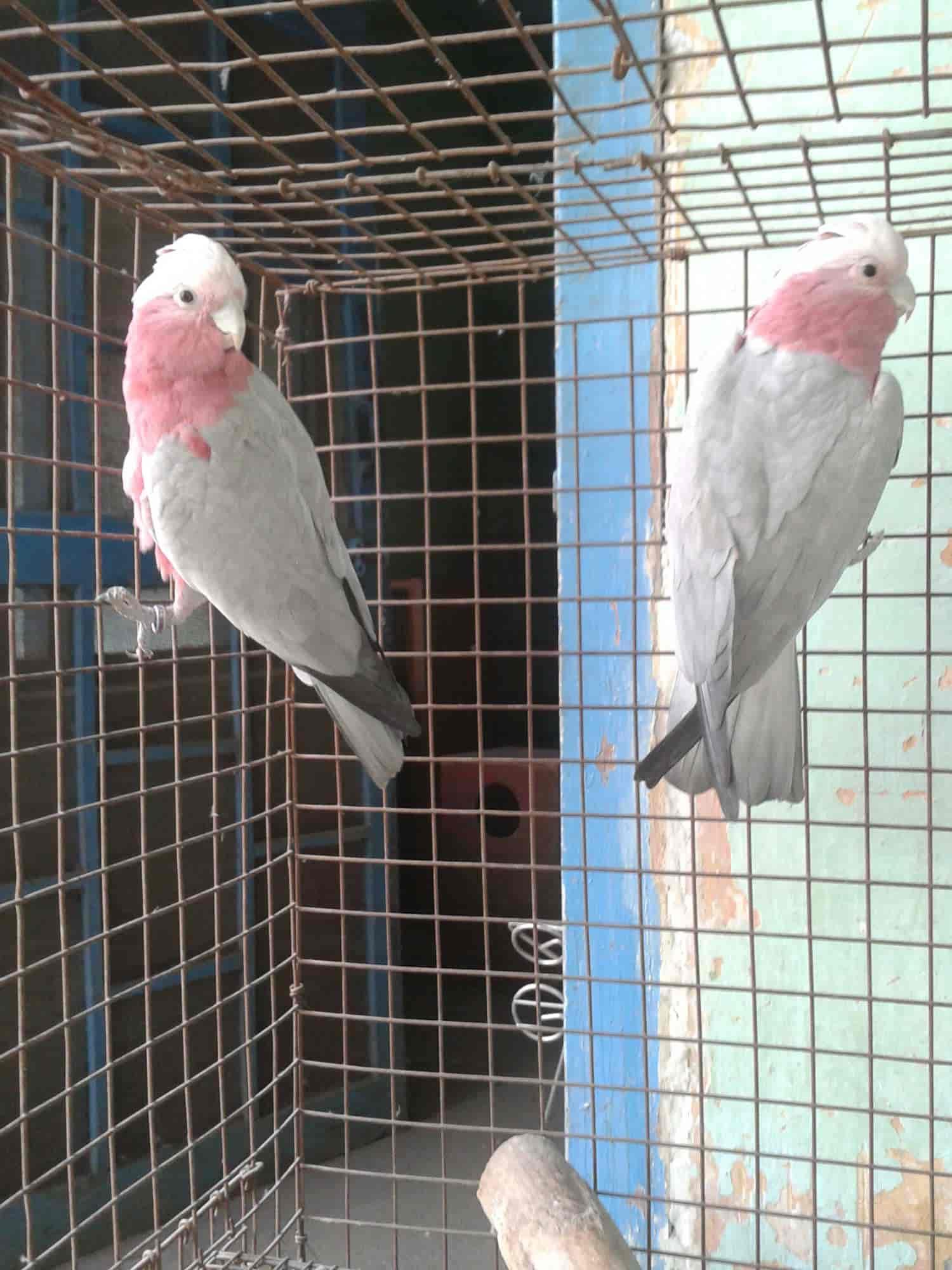 hobby zoo birds and parrot shop photos laxmi nagar delhi pictures